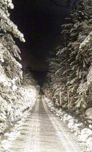 metsatie talviyossa