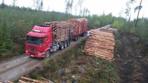 puita kyytiin